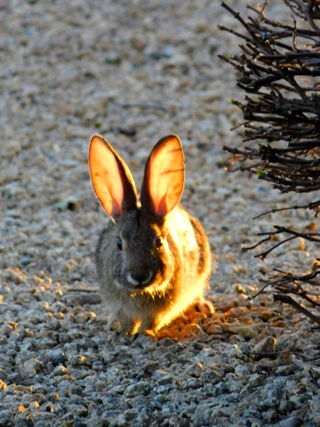 Rabbits 0273.jpg